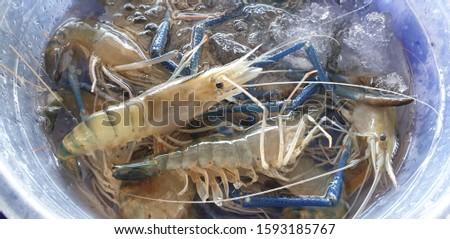 Fresh shrimp for Cooking. Fresh shrimp. Fresh food.Fresh shrimp from local farm.