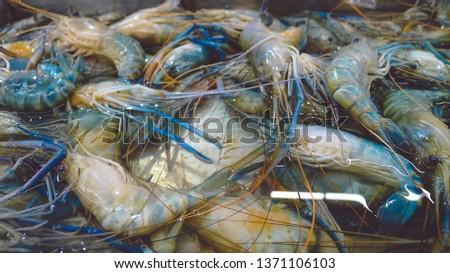 Fresh shrimp. Fresh shrimp in the market, fresh shrimp background and close-up #1371106103