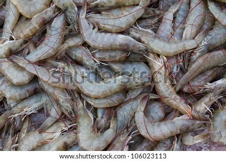 Fresh Shrimp on the market in Thailand .