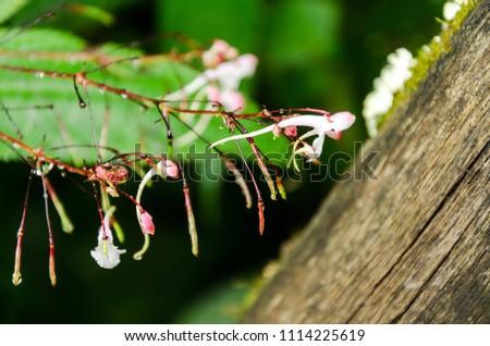 fresh small flower after rain fall