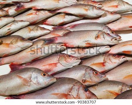Fresh Snapper fish on display at a London market