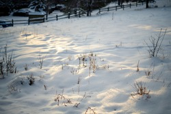 Fresh snow bank at dawn with shrubs and twigs peaking out of the snow