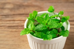 Fresh spearmint leaves in white bowl on wooden plate