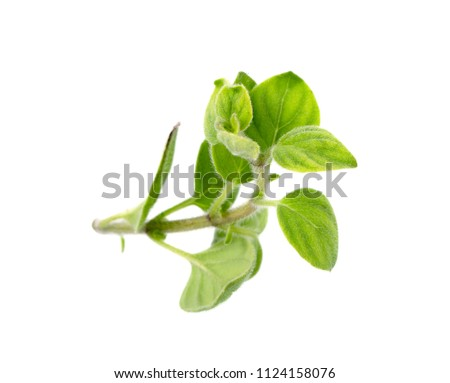 Fresh sprig of oregano and dry oregano spice isolated on white background #1124158076