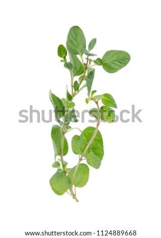 Fresh sprig of oregano and dry oregano spice isolated on white background #1124889668
