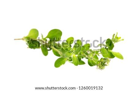Fresh sprig of oregano and dry oregano spice isolated on white background #1260019132
