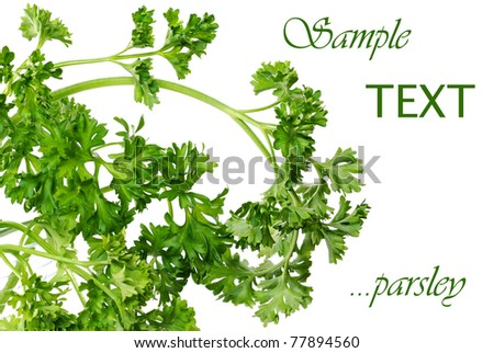 Fresh sprigs of parsley in glass vase on white background with copy space.  Macro with shallow dof.