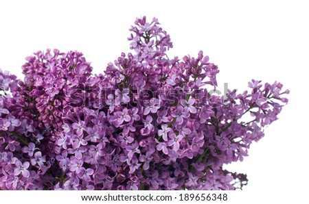 Fresh spring bouquet purple lilac flowers, floral background, isolated on white background #189656348