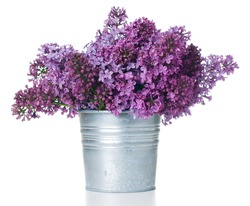 Fresh spring bouquet purple lilac in zinc plant pot isolated on white background