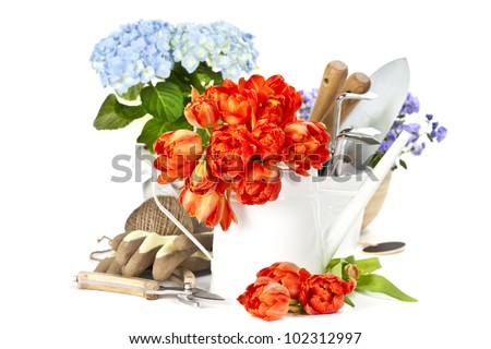 Fresh spring flowers and garden tools