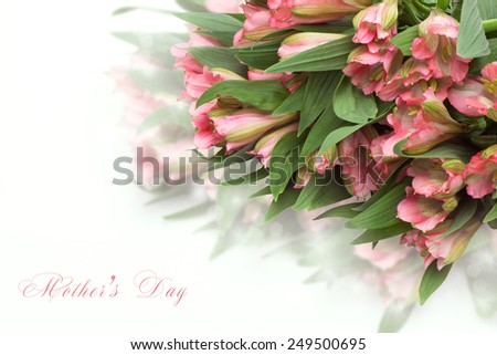 Fresh spring flowers as a holiday postcard design with copy space on white background