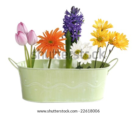 fresh spring flowers in green tin container