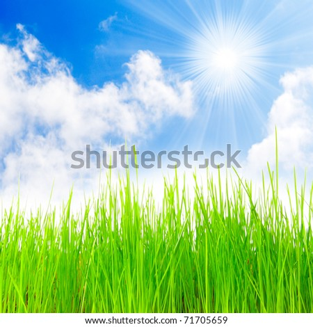Grass backgrounds.