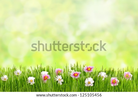 Fresh spring grass with flowers on a sunny day with natural blurred background