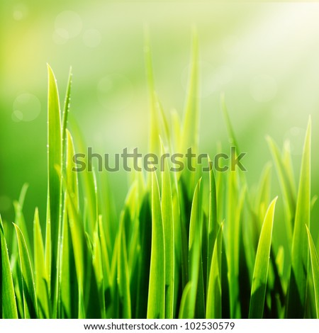 Fresh spring green grass and sun