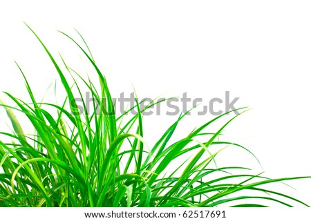 Fresh spring green grass isolated on white background.
