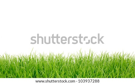 Fresh spring green grass panorama isolated on white background