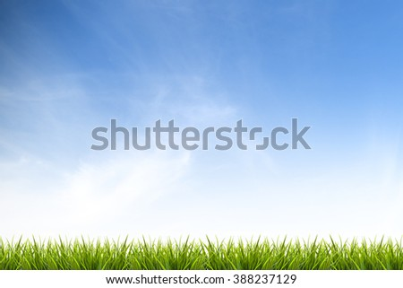 Fresh spring green grass under beautiful blue sky ,clouds and sunlight - use for background in natural summer concept