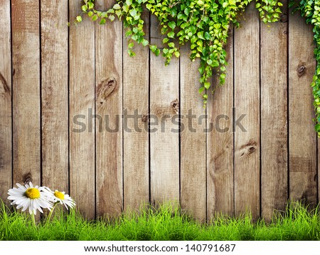 Fresh spring green grass with white flower camomile and leaf plant over wood fence background #140791687