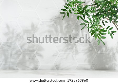 Fresh spring green leaves on branch in sunlight with shadow on white marble tile wall, wood table, copy space.