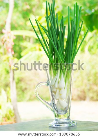 Fresh spring onion (also know as Scallions, Green shallots, Onion sticks, Green onions or Salad onions) in glass.