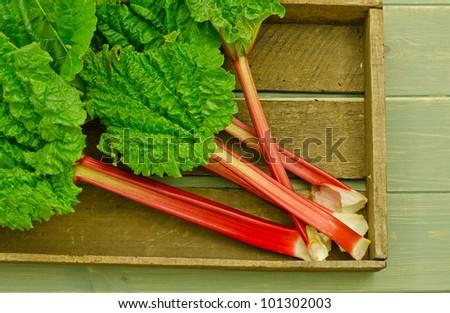 fresh spring rhubarb