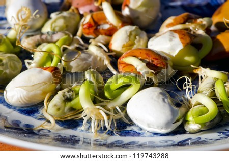 fresh spring time bean sprouts in plate