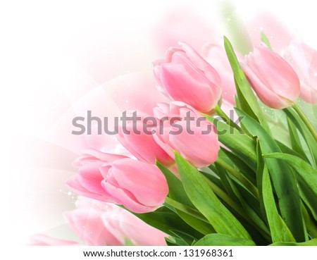 Fresh spring tulip flowers as a holiday postcard design