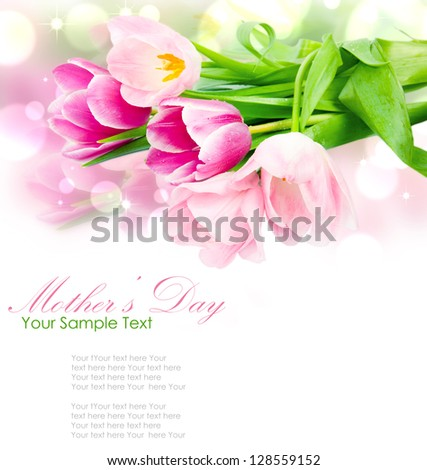 Fresh spring tulip flowers isolated on white