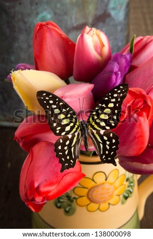 Fresh spring tulips and butterfly still life - stock photo