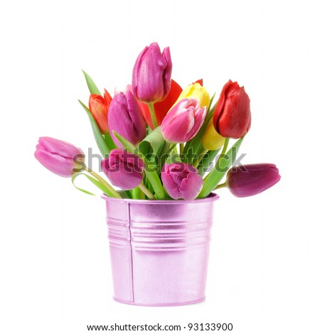 Fresh spring tulips in bucket