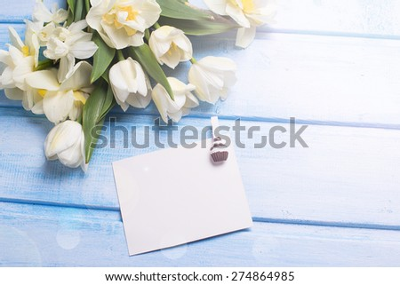 Fresh  spring white tulips and narcissus flowers  and empty tag on blue  painted wooden background. Selective focus. Place for text. Square image.