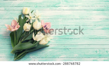 Fresh  spring y tulips and narcissus flowers on turquoise  painted wooden background. Selective focus. Place for text. Toned image.