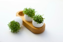 Fresh sprouted green sprouts. Green cress salad in eggshell. Fresh greens. Green sprouts. Preparing for Easter. Easter decoration for table setting.