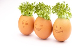 fresh sprouts in an egg shell, sprout heads, watercress hair, Growing Cress in Egg Shells, eggheads, egg shells with faces drawn on, Eggheads With Cress Hair, Fresh cress in an egg shell