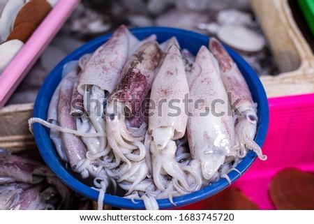 Fresh squids calamar on the fish market counter Сток-фото ©