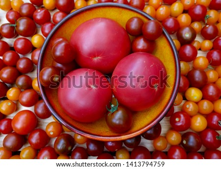 """Fresh """"Steak Sandwich"""" variety tomatoes in yellow bowl surrounded by cherry tomato varieties Sun Gold, Sunchocola, Black Pearl, Sweetheart of the Patio, and Chadwick."""