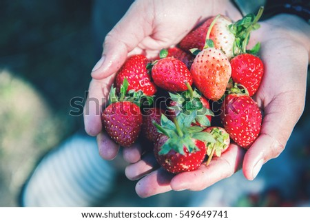 Fresh strawberries closeup. holding strawberry in hands #549649741