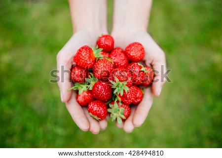 Fresh strawberries closeup. Woman holding strawberry in hands #428494810