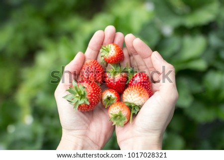 Fresh strawberries in human hand #1017028321