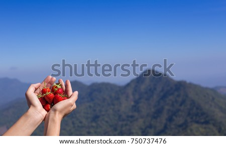 fresh strawberries in human hand, on mountain background. #750737476