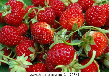 Fresh Strawberries wallpaper . Can be used as background