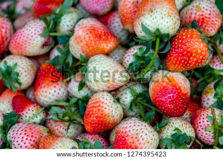 Fresh Strawberry Background. Ripe and Not Ripe Strawberry. #1274395423