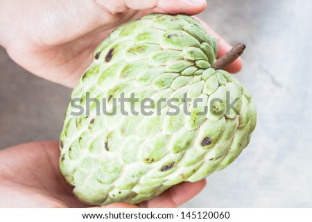 Fresh sugar apple hand on present size