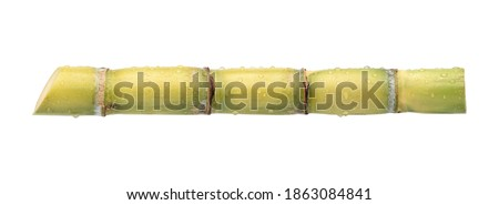Fresh sugar cane stalk with water droplets isolated on white background. Clipping path Foto stock ©