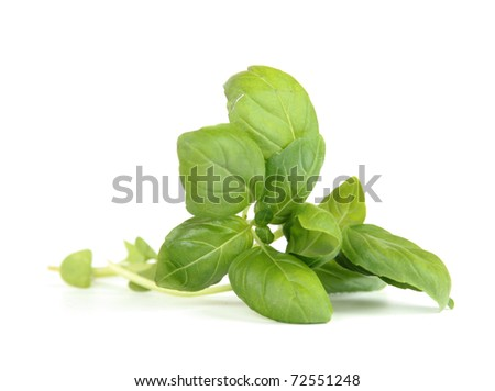 Fresh sweet basil leaves isolated