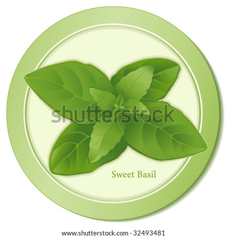 Fresh Sweet Basil: Popular aromatic herb for seasoning salads, soups, meats, poultry, egg, cheese dishes, Herbes de Provence, Italian, Asian & Mediterranean cuisines. - stock photo