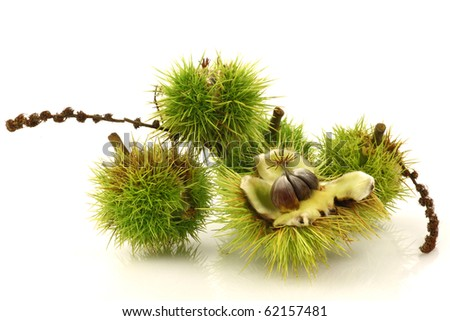fresh sweet chestnuts on a white background