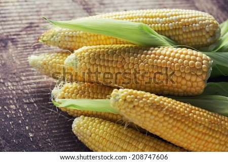 Fresh sweet corn on wooden table. Selective focus.