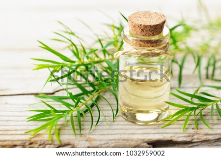 fresh tea tree twig and essential oil on the wooden board